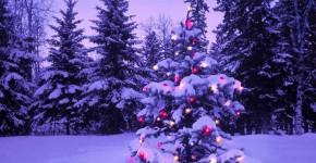 Anguille électrique et sapin de Noël