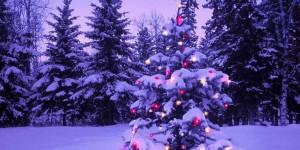 Insolite : Une anguille électrique illumine un arbre de Noël