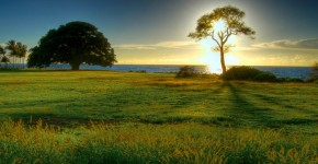 SolarBotanic-arbre-artificiel-une