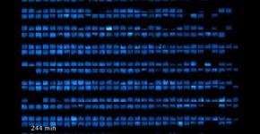 biopixel_bacterie_1