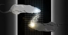 Telepathie-Brain-To-Brain-Interface